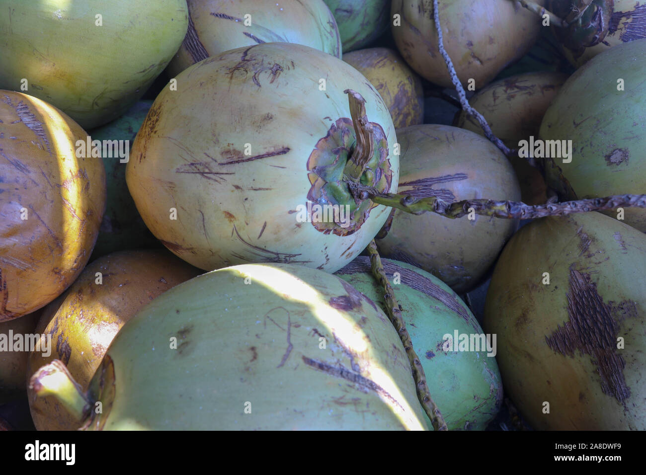 A pile of fresh green coconuts at a market in Indonesia. Fresh drink sale. Healthy and refreshing energy drink in natural packaging. Young coconuts. Stock Photo
