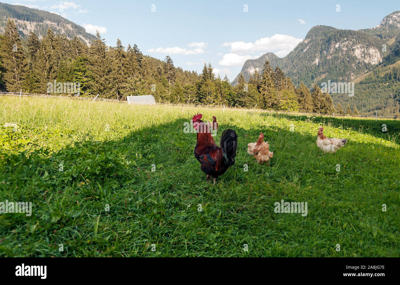 Mountains in the Austrian Alps on a sunny day Stock Photo