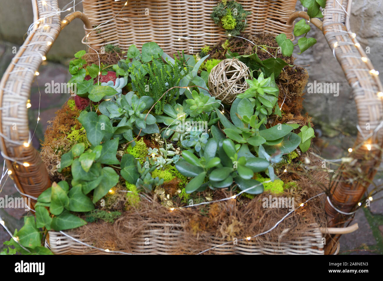 Different Types Of Succulents On A Wicker Chair Stock Photo