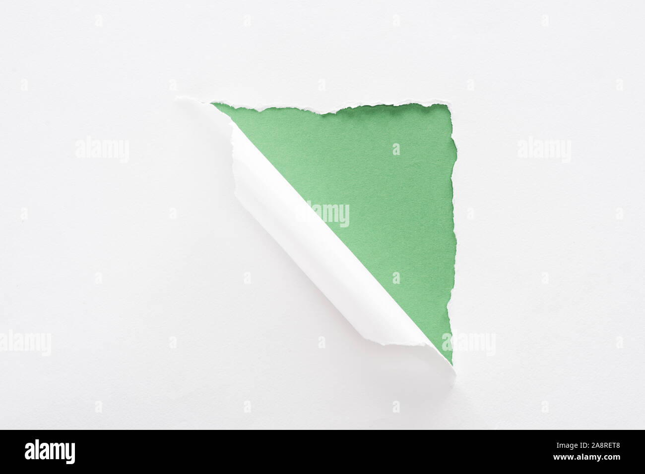 white torn and rolled paper on green background Stock Photo