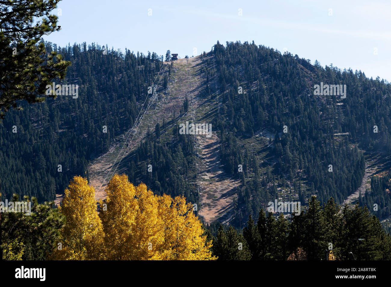 Ski Slope Runs Without Snow Late October Lake Tahoe California Autumn Leaves On Tree In Foreground Stock Photo