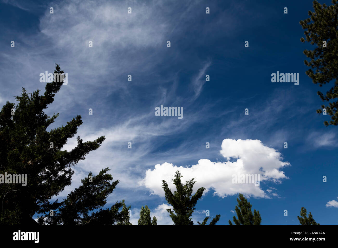 Blue Sky With White Clouds And Green Pine Tree Branches Southern California Stock Photo
