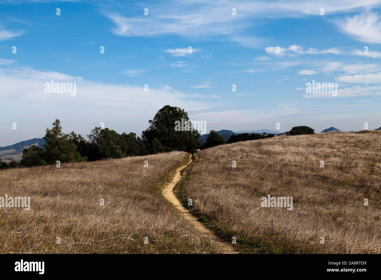Yellow Grass Covered Hill Top With Dirt Path Green Trees blue Sky And White Clouds Stock Photo