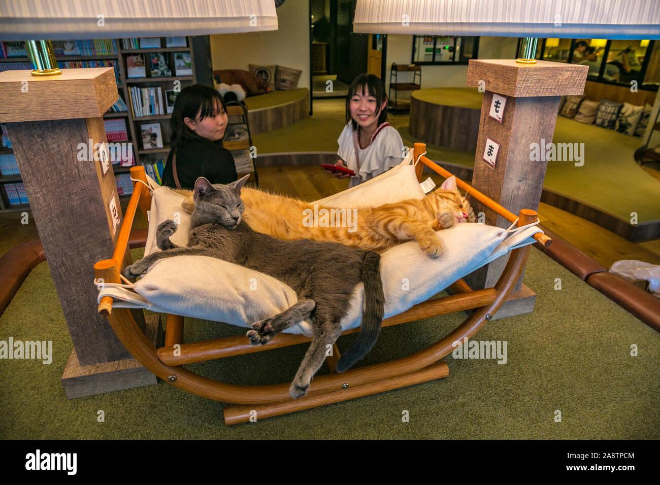 Cat Cafe Mocha Lounge Ikebukuro District Toshima Tokyo Japan Asia Stock Photo Alamy