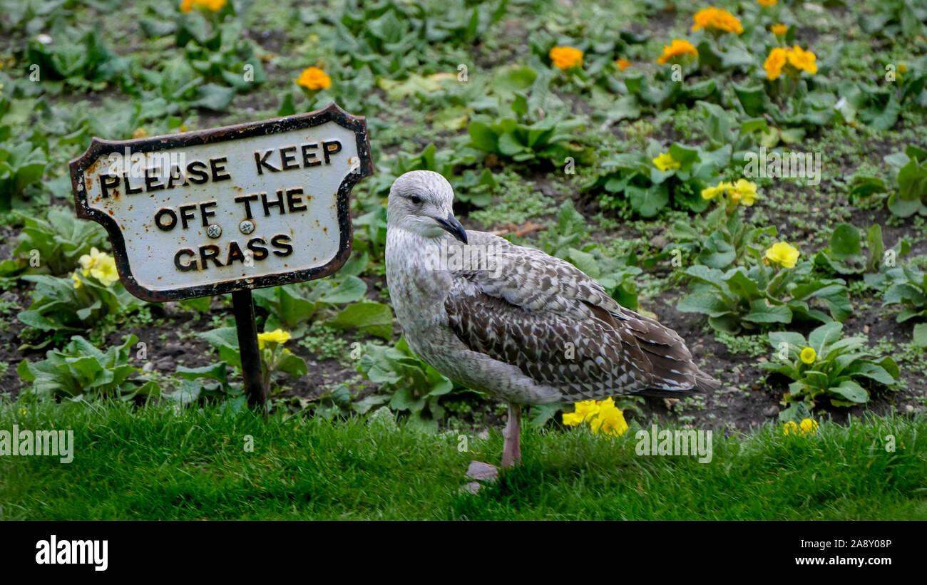 bad Boy Seagull break the rules Stock Photo