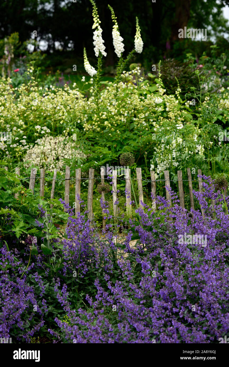 White Foxglove White Silene White Digitalis Mix Mixed White Garden