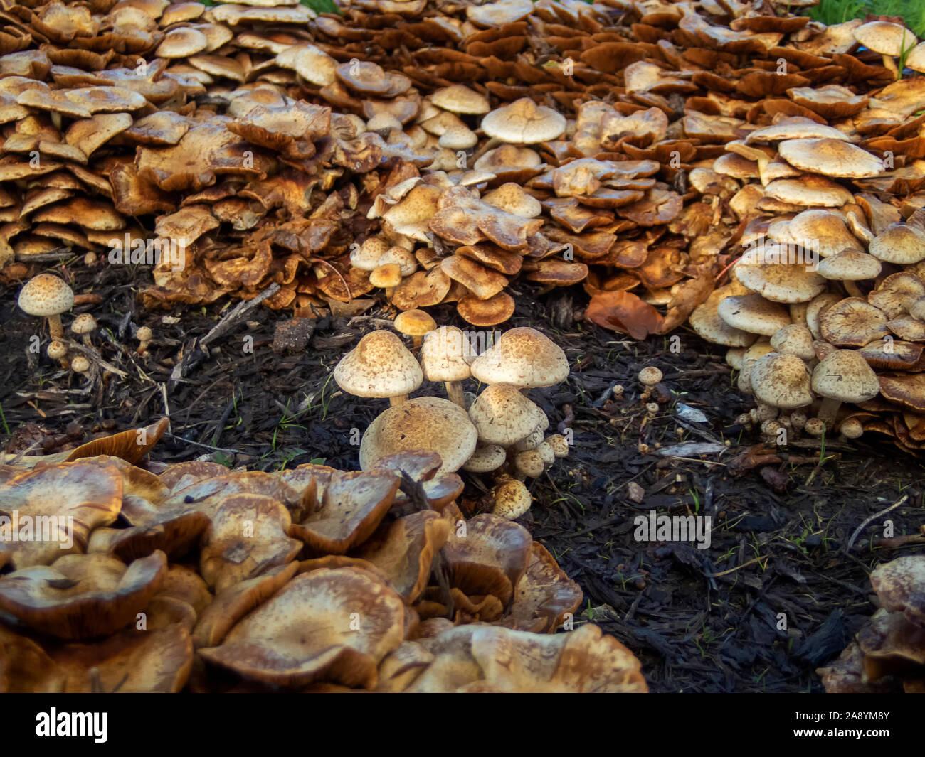 Brown Mushroom Fungus Fungi Embroidery Patch
