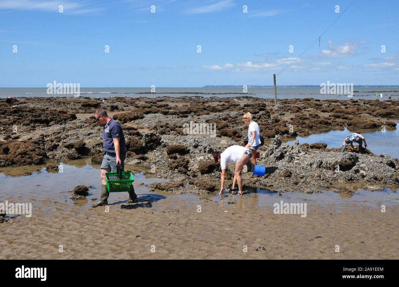 Collecting shellfish,  Loire Atlantique, France Stock Photo