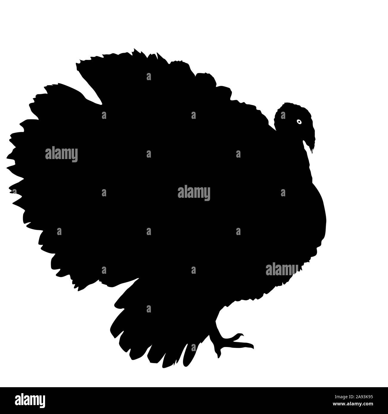 Silhouettes black of turkeys on a white background. Stock Photo
