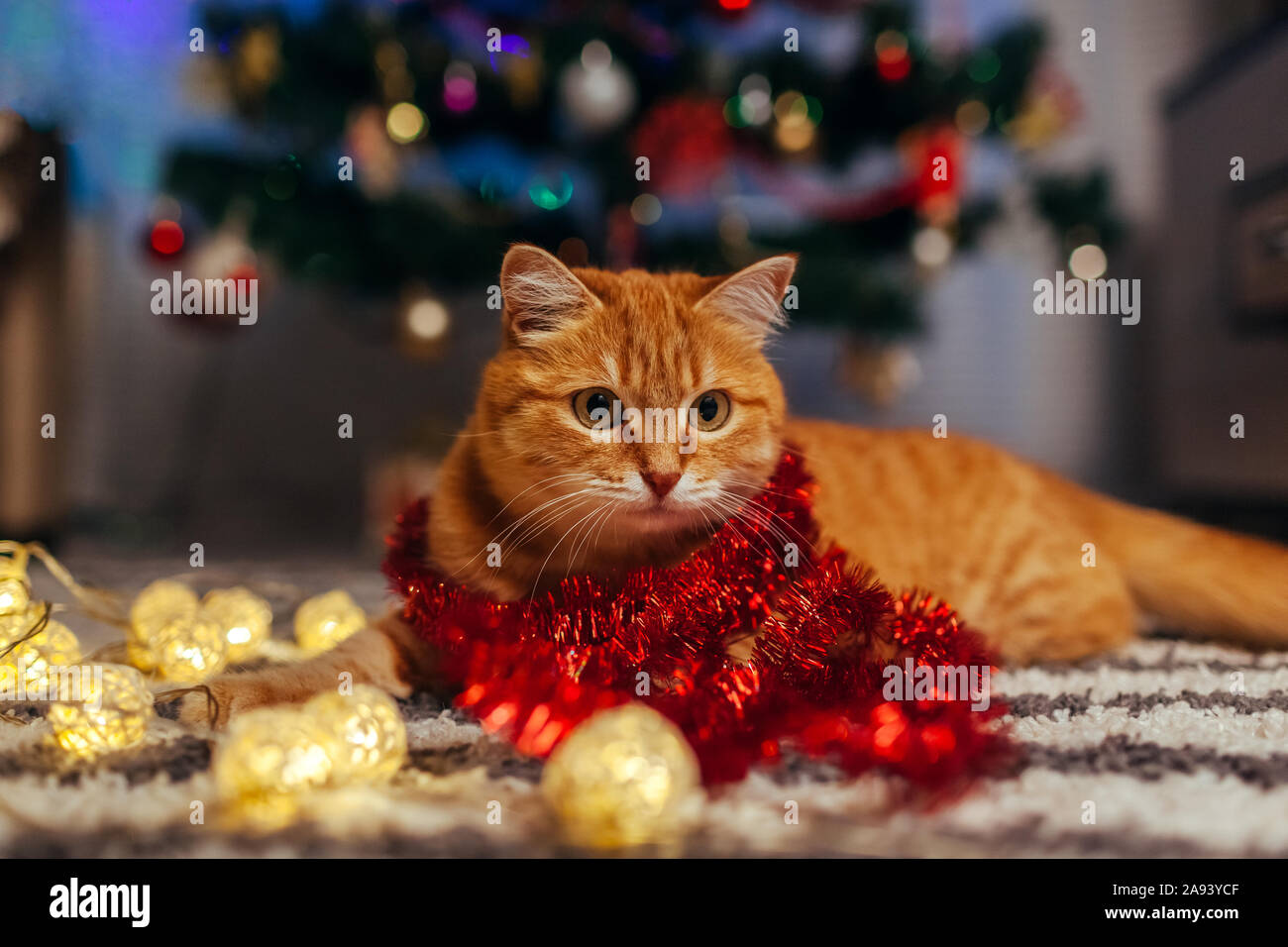 Ginger cat playing with garland under Christmas tree. Christmas and New year concept Stock Photo
