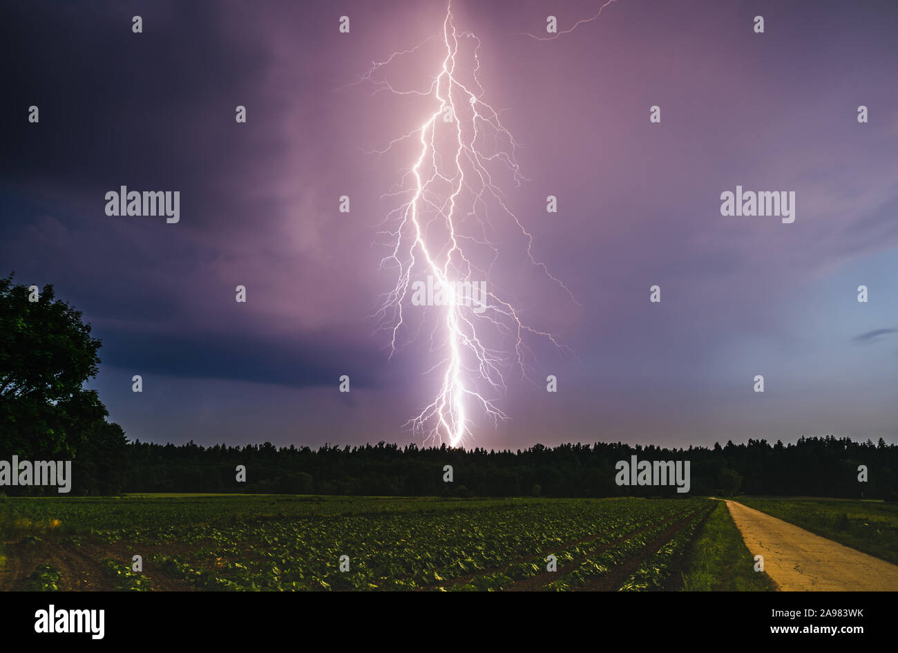Dramatic lightning bolt at night over rural area. Agriculture fields. Stock Photo