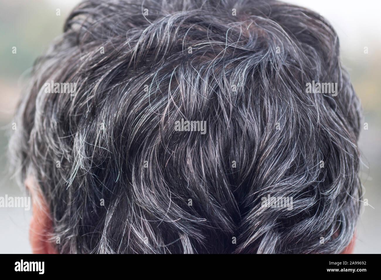 Grey Hair Gray Hair On The Head Backside Portrait Of Man Stock Photo Alamy