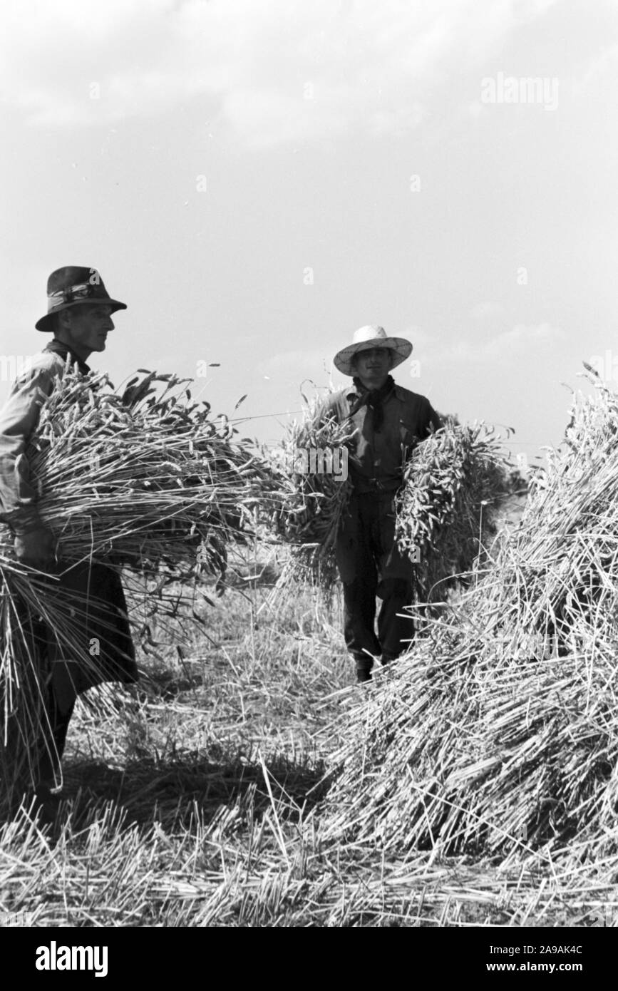 Szenes of the countrified workaday life, Germany 1930s. Stock Photo