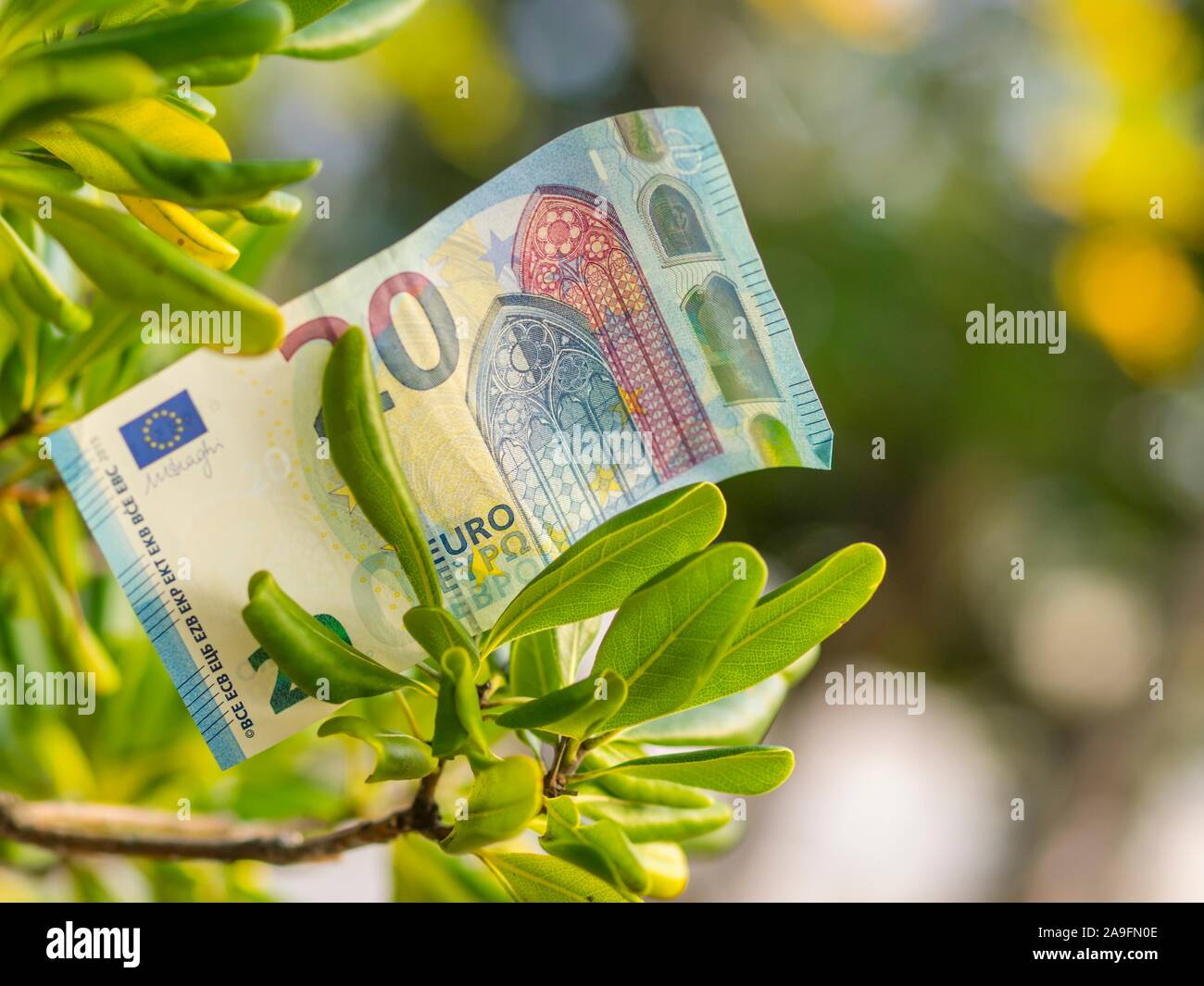 Money growing on tree Stock Photo