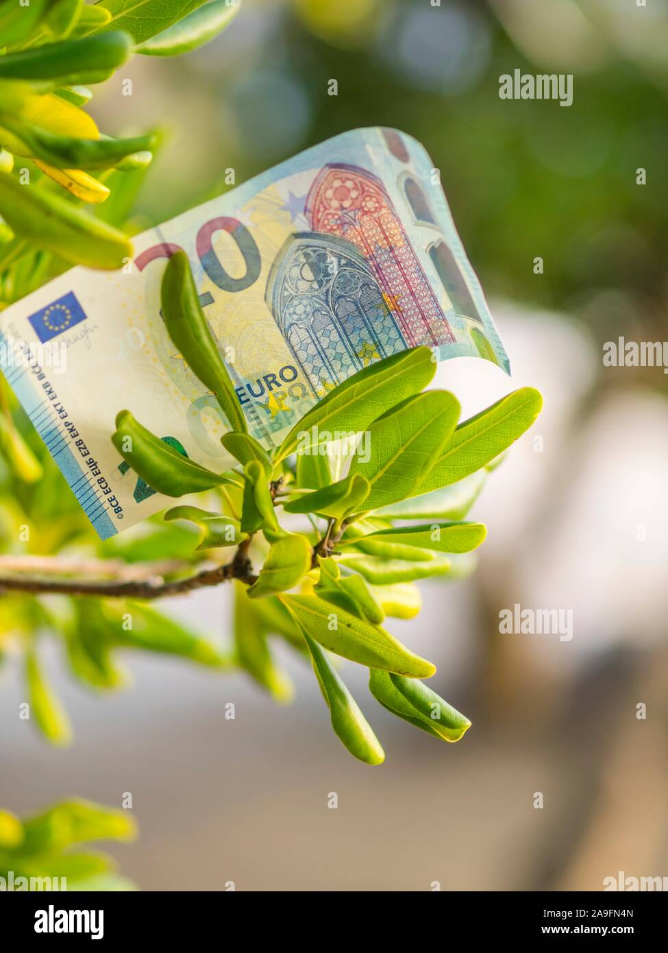 Money growing on tree Stock Photo
