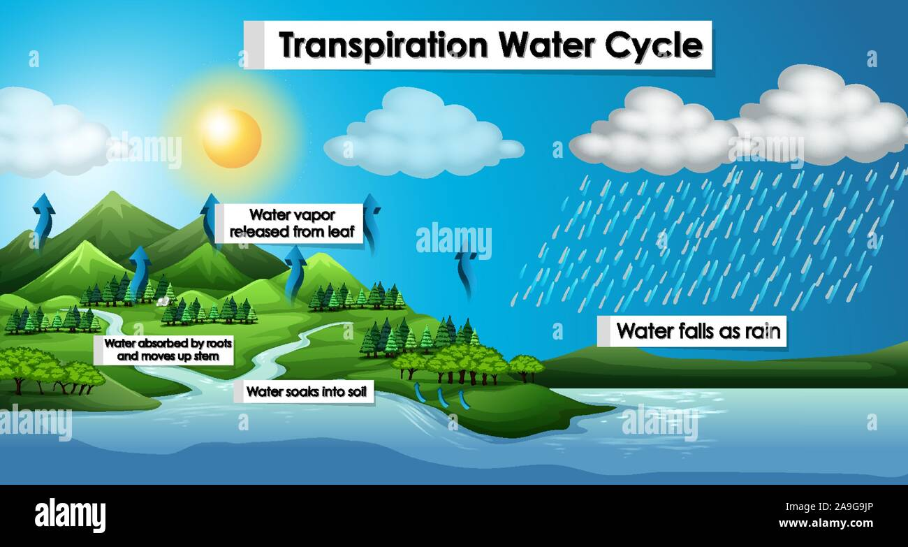 water cycle diagram stock photos & water cycle diagram stock groundwater diagram diagram shows the water cycle #15