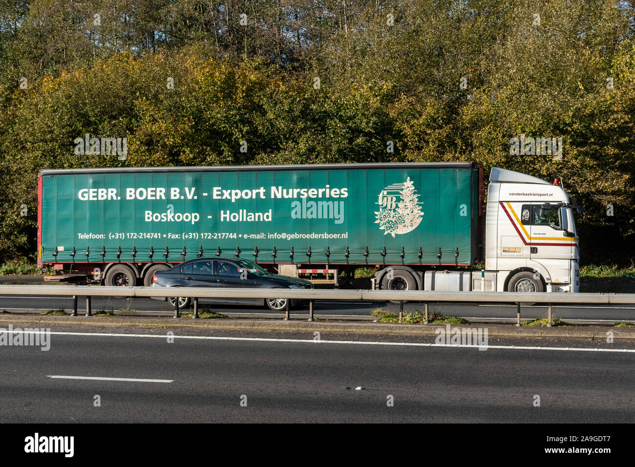 Gebr. Boer. B.V. Export Nurseries lorry or truck, from Holland, driving along a dual carriageway, UK Stock Photo