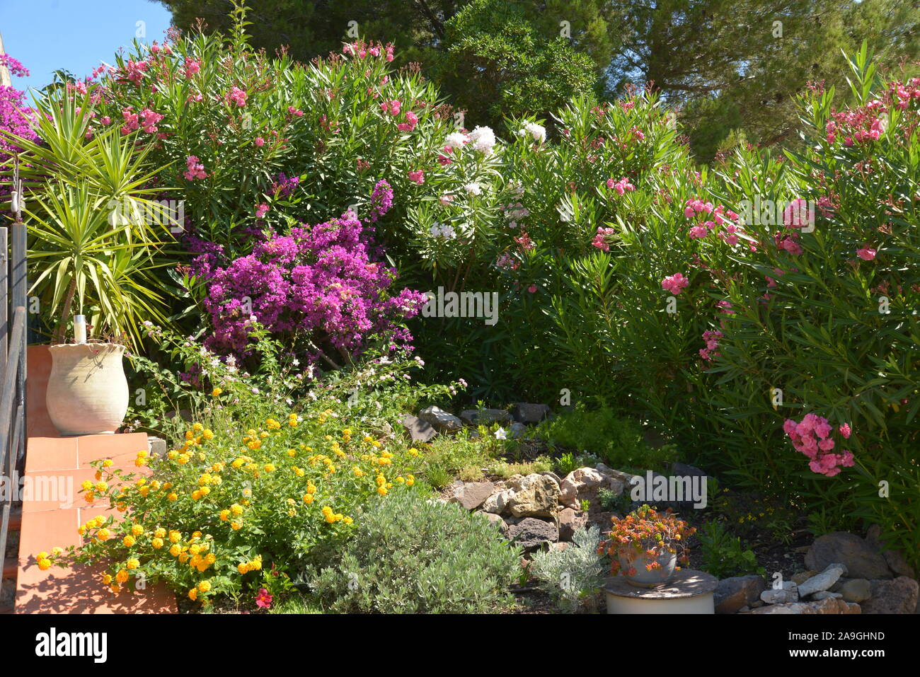 Mediterranean Gardens In Six Fours France Provence Stock Photo