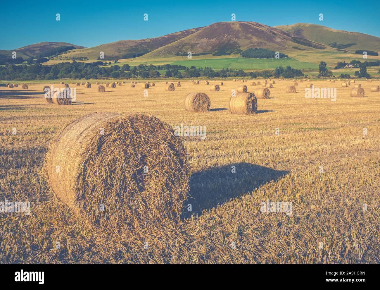 UK Farming Image Of A Round Bale Of Straw On A Scottish Farm Stock Photo