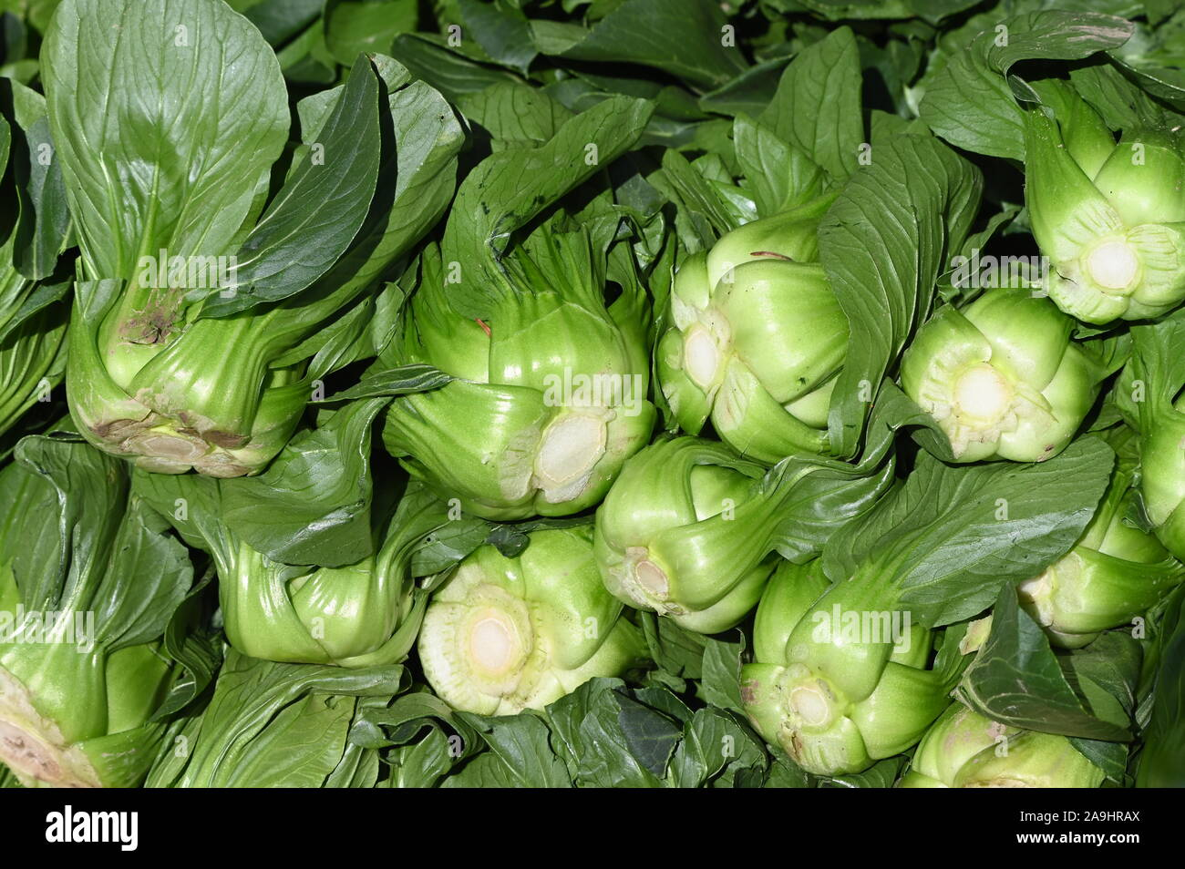 brassica rapa chinensis, Pak Choi, a delicious Chinese cabbage Stock Photo