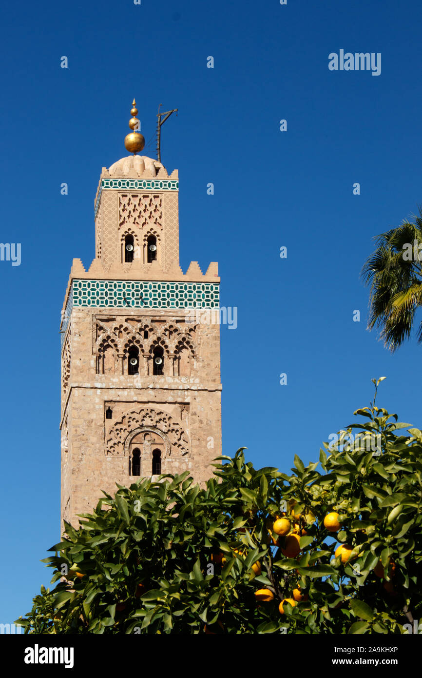 Koutoubia-Mosque in Marrakesh with a  cloudless blue sky and an orange tree in the foreground Stock Photo