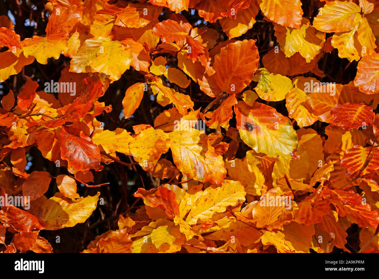 Autumn leaves and fruits in the countryside Stock Photo