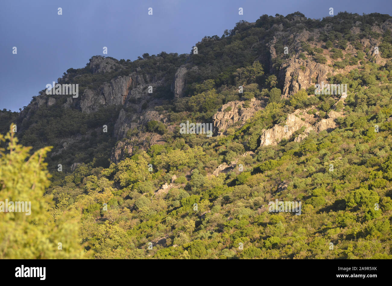 Oak woodlands and Mediterranean scrubland in Sierra Madrona natural park, southern Spain Stock Photo