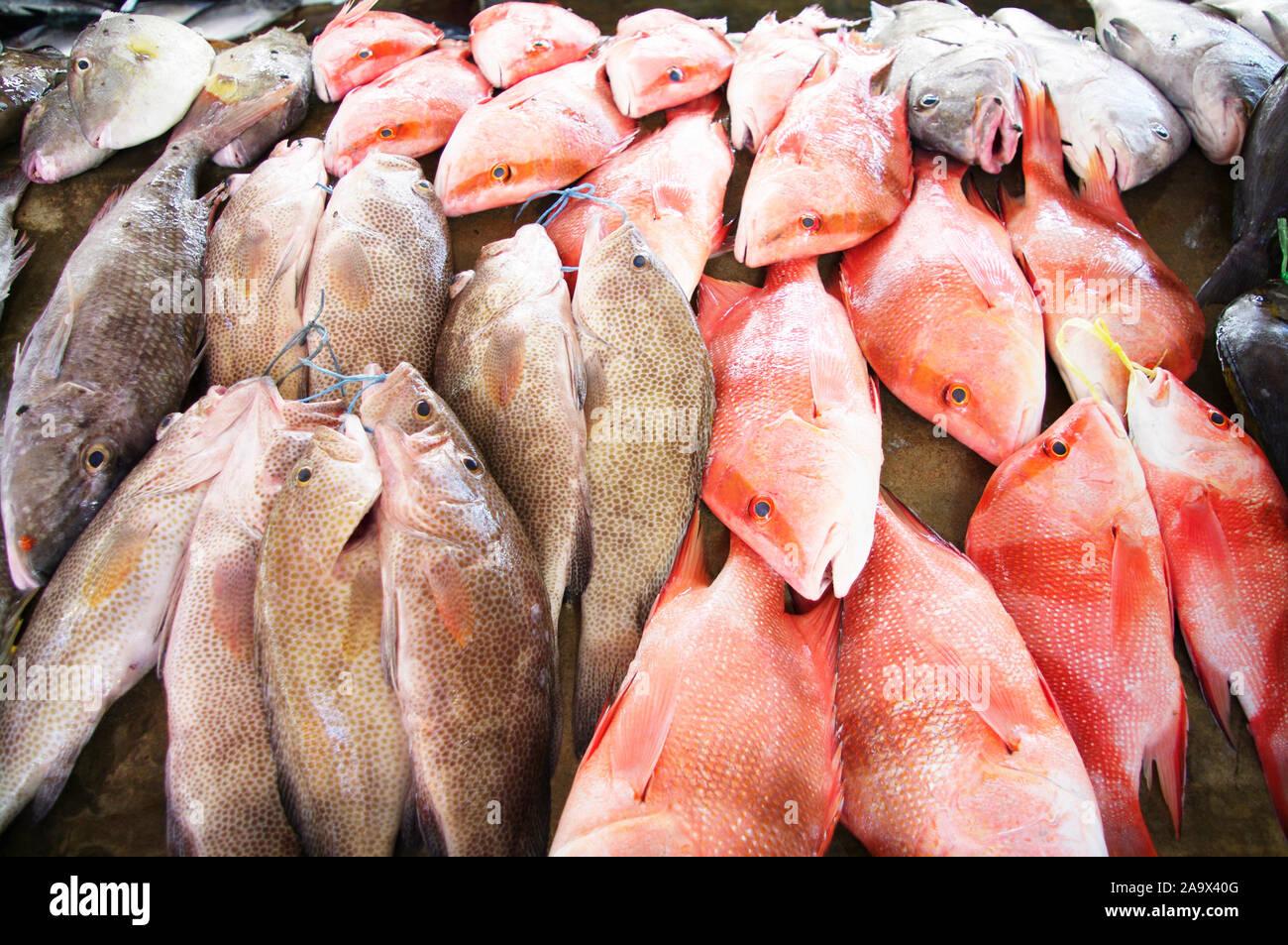Fischmarkt Sir Selwyn Selwyn-Clarke Market in Victoria mit Red Snapper / Malabar-Schnapper / Roter Schnapper / Lutjanus malabaricus und anderen Fische Stock Photo