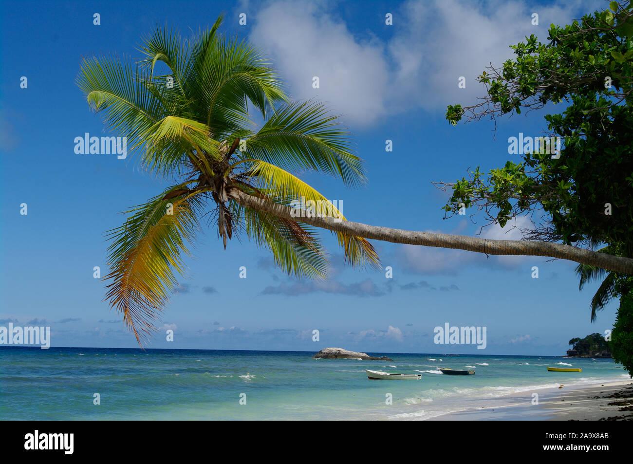 Schattiger Platz zum Entspannen unter einer Palme am Beau Vallon Strand mit Granitfelsen, tropisches Paradies an der Nordkueste der Hauptinsel Mahe, S Stock Photo