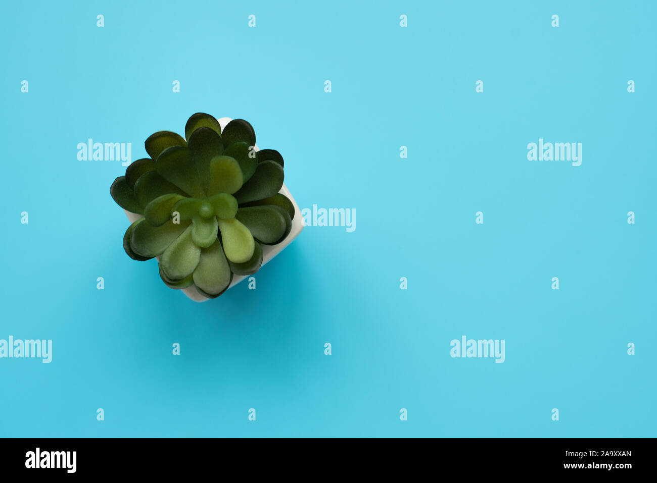 Green House Plants Potted Succulent On Blue Background Top View Copy Space Green House Plant In Pot Stock Photo Alamy