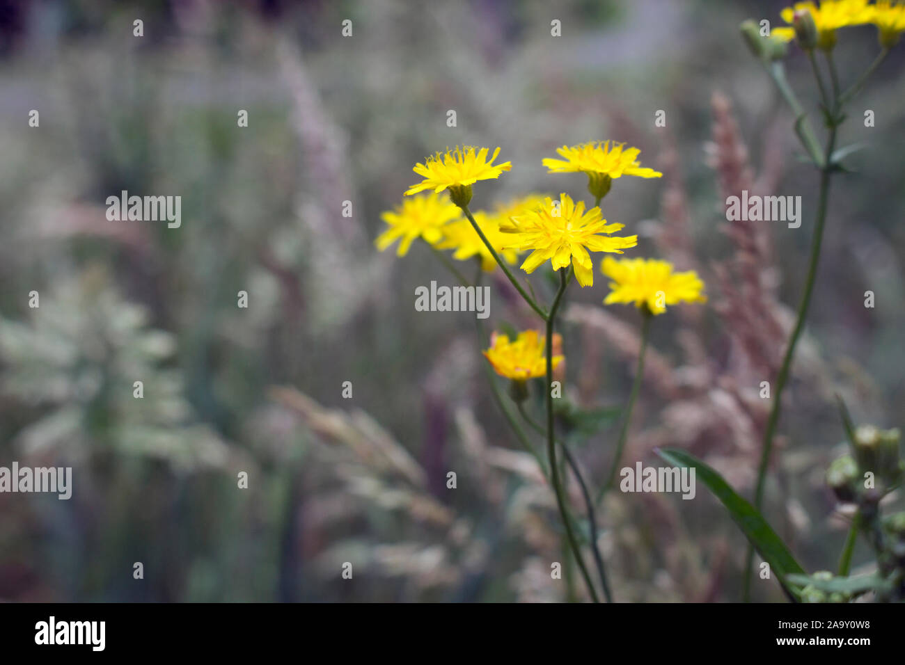 Nature in its simplest, purest form. The wild spring nature of southern Brazil. Stock Photo