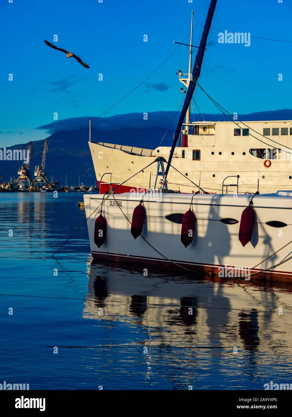 Harbor Rijeka in Croatia passing gull two ships lined by their bows Stock Photo