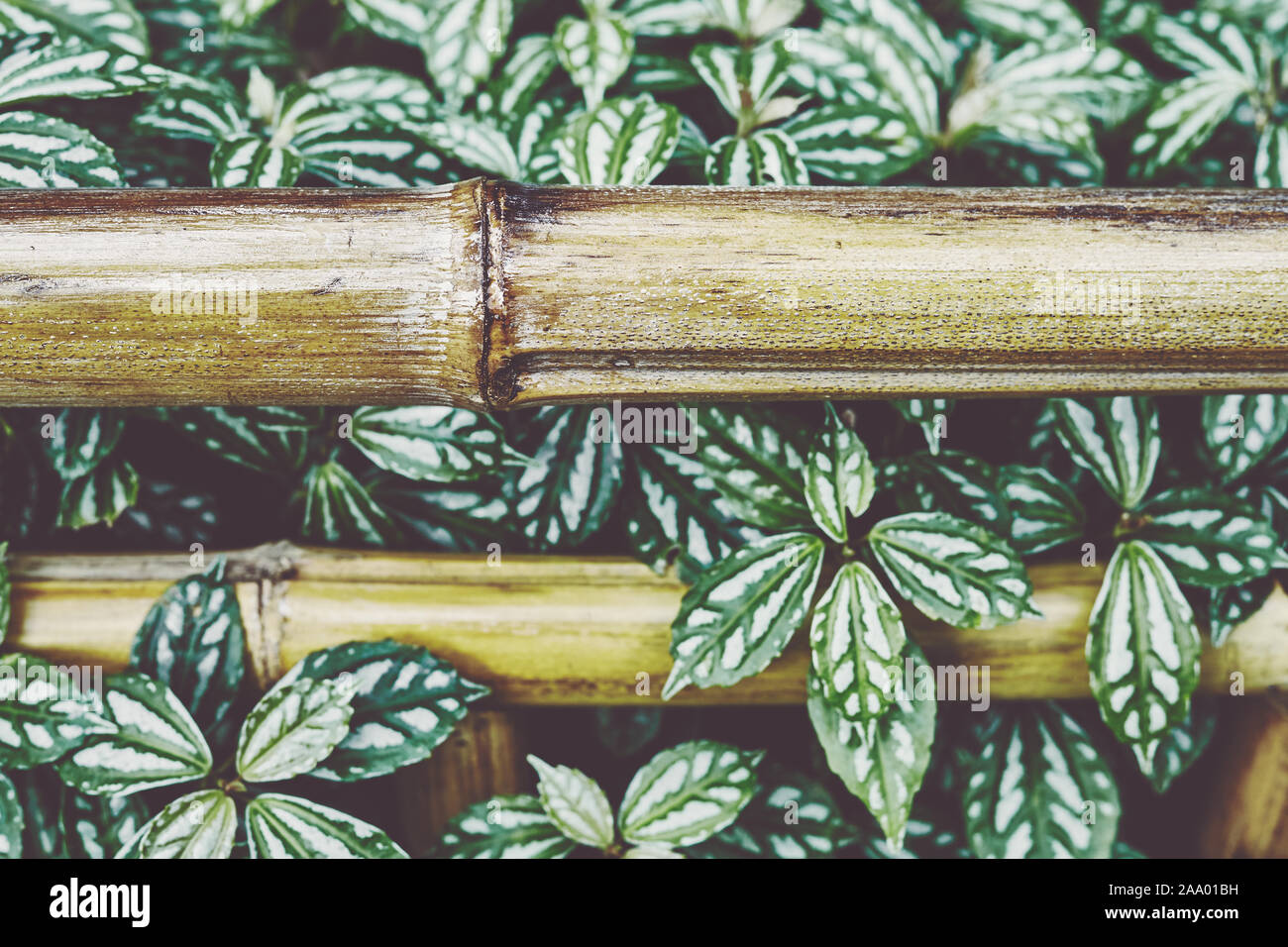 decorative gate in bamboo fence stock image image of.htm bamboo fence garden stock photos   bamboo fence garden stock  bamboo fence garden stock photos