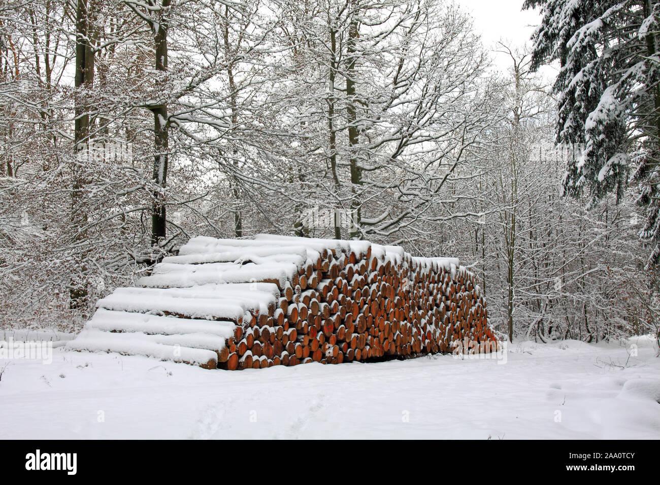 Forstwirtschaft, Holzstämme im Winter Stock Photo