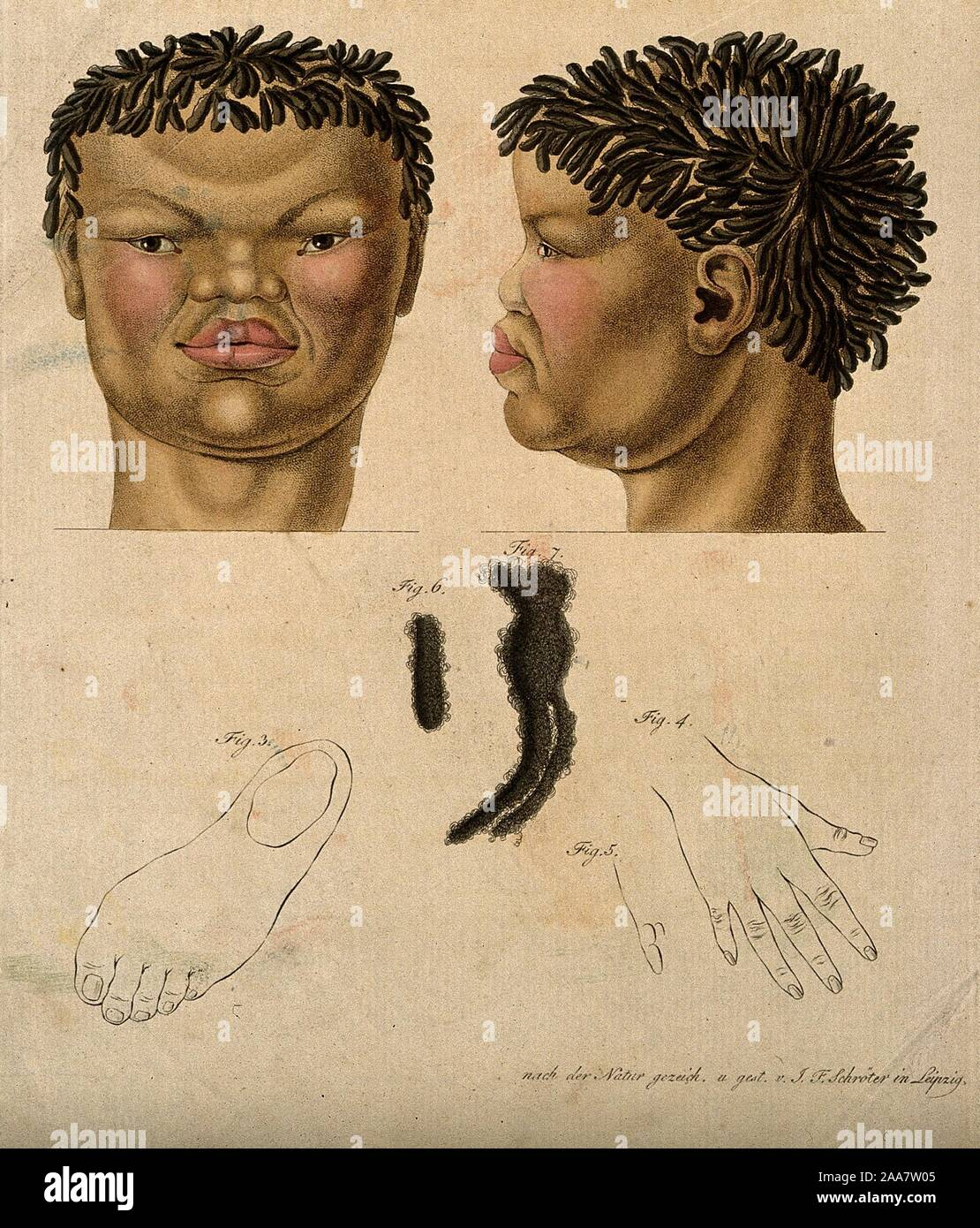 Head Neck Hand Foot And Hair Of A Non European Woman Coloured Engraving By J F Schrter Ca 1830 Jpg 2aa7w05 Stock Photo Alamy