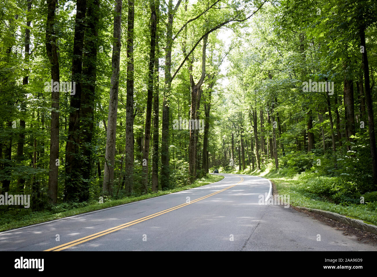 car in the distance on parkway us 441 highway route through great smoky mountains national park usa Stock Photo
