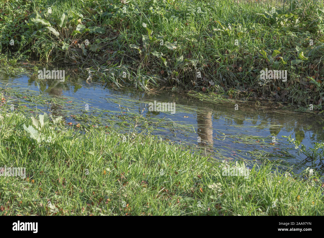 Field drainage ditch in sunshine, but flooded by winter rains and full of aquatic weeds and grasses. Stock Photo
