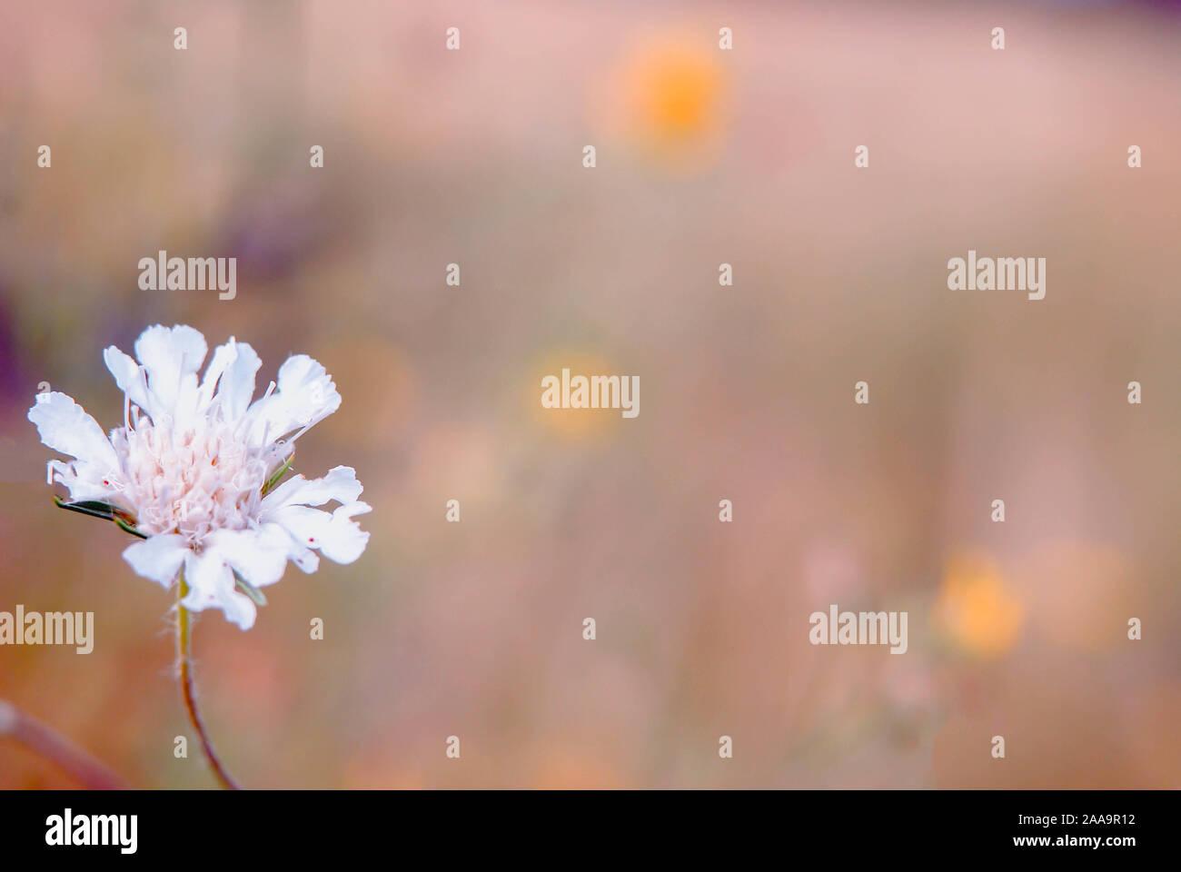 Background Of White Wildflowers Blank Template Pattern Desktop