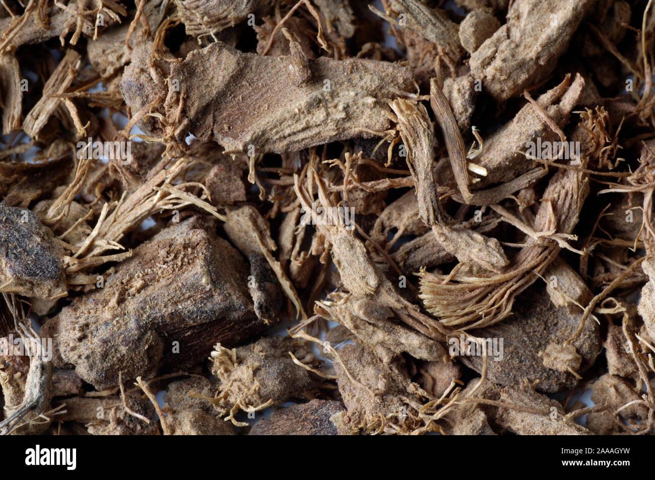 Alpinia galanga Thai-Ingwer großer Galgant