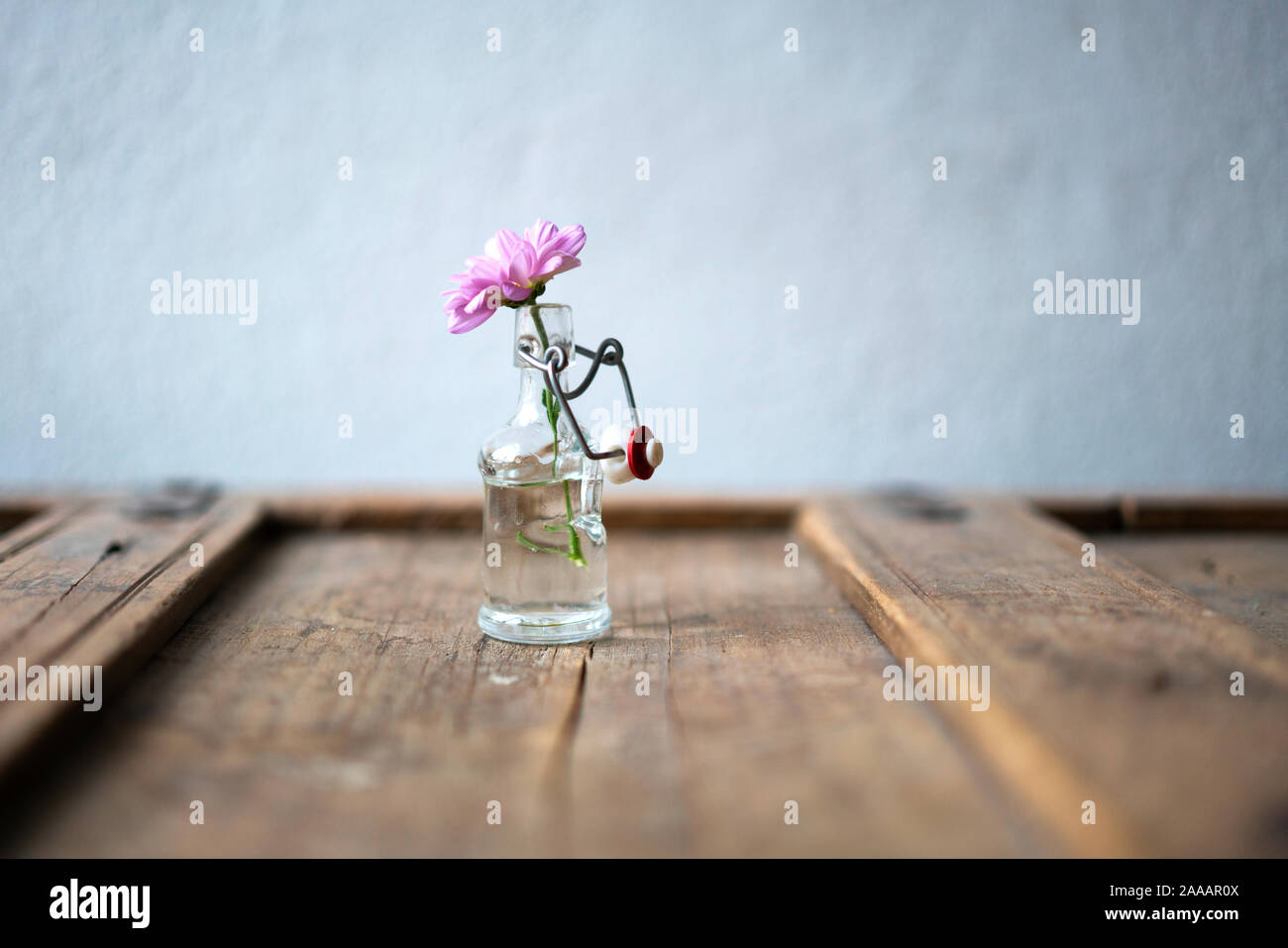 Detail of a pink aster in a small glass bottle on a cracky shabby stylish wooden furniture in front of a white wall Stock Photo