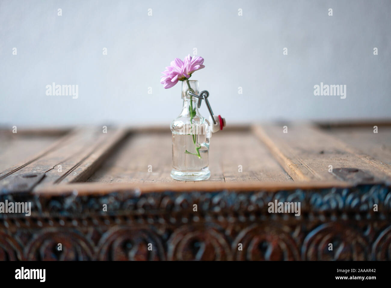Beautiful pink aster in a small glass vase decorated on a shabby rustic wooden cabinet in front of a white wall Stock Photo