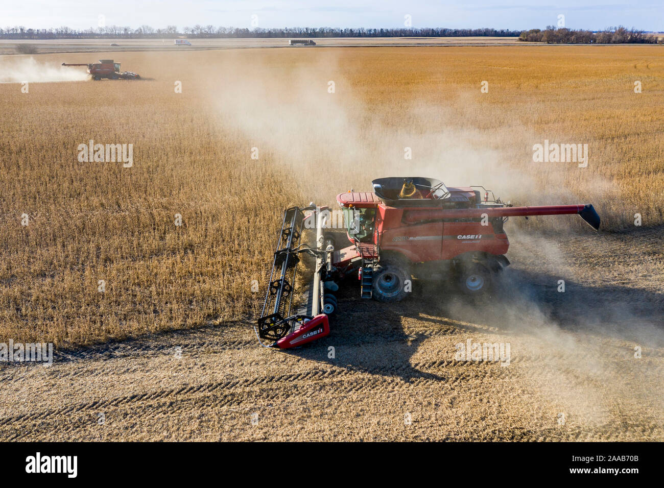 Valley City, North Dakota - Combines harvest soybeans at the Noeske Seed Farm. The soybeans will be sold through seed companies for next year's crop. Stock Photo