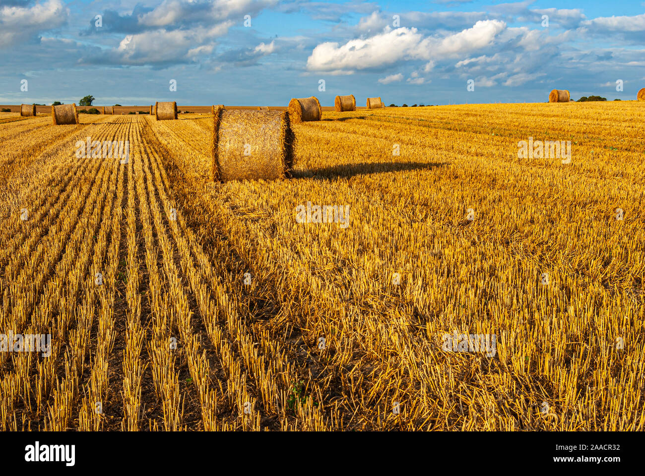 Bales of straw on a harvested grainfield at the end of summer. Stock Photo