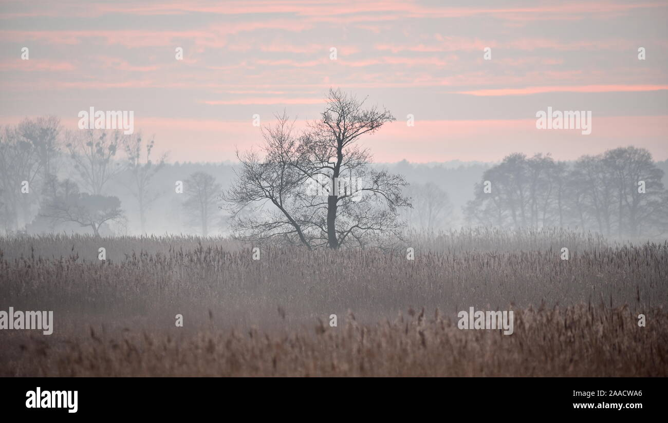 Twilight in the nature park Nuthe-Nieplitz near Stangenhagen Stock Photo
