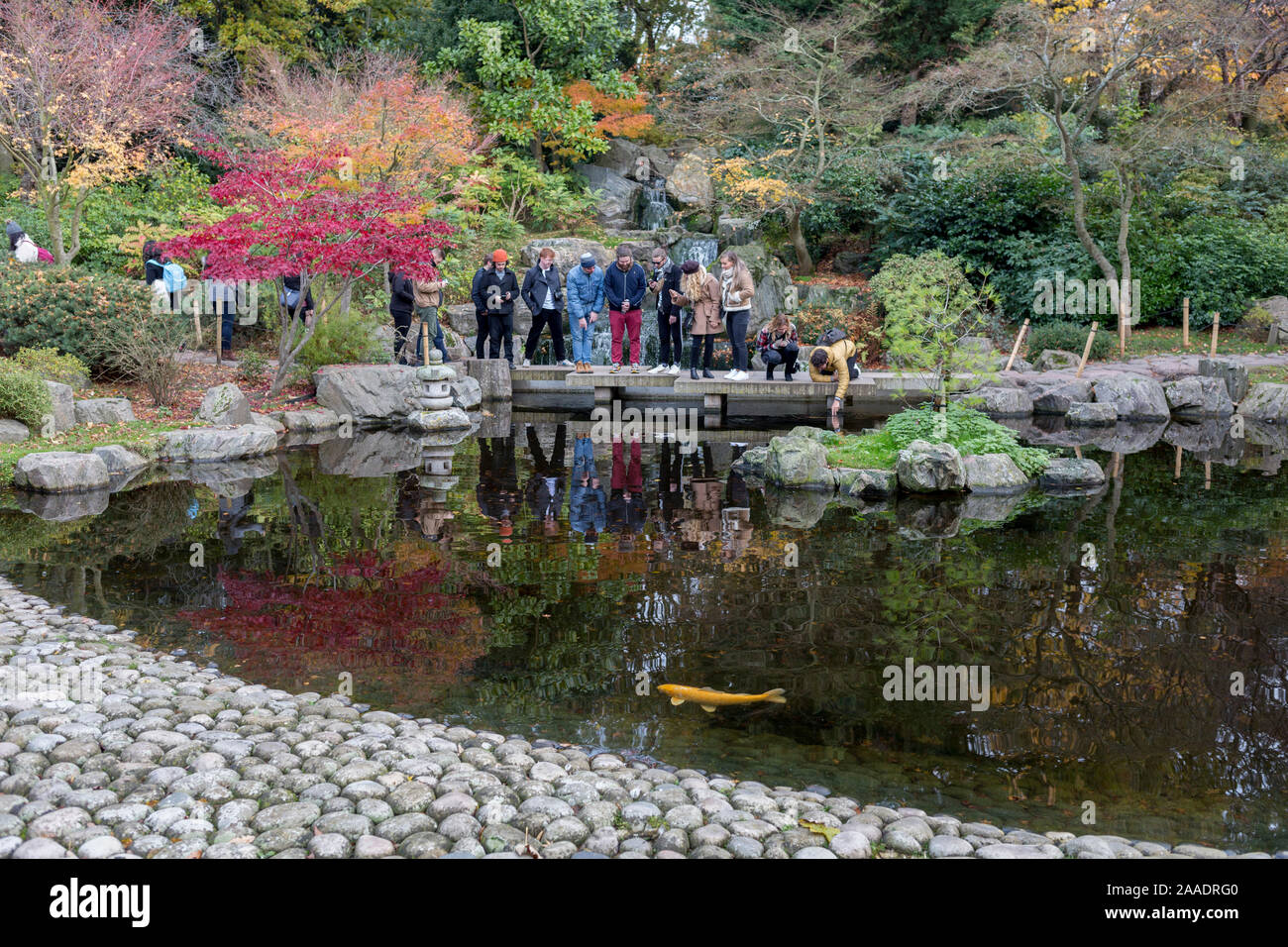 Visitors to the Kyoto Garden look into the water to see koi carp in Holland Parks' Kyoto Garden, on 17th November 2019, in London, England. The Kyoto Garden was opened in 1991. It was a gift from the city of Kyoto to commemorate the long friendship between Japan and Great Britain. Today, the Kyoto Garden is a popular part of Holland Park – but it's not the only Japanese garden in this green space. In July 2012, the Fukushima Memorial Garden was officially opened. It commemorates the gratitude of the Japanese people to the British people for their support following the natural disasters that st Stock Photo