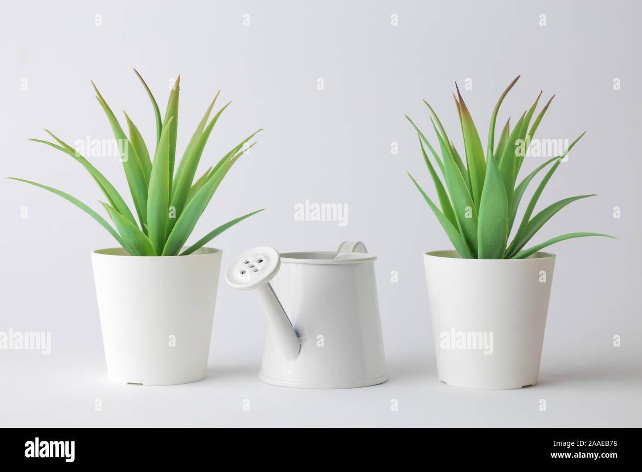 Small Green Plants In Pots And Watering Can Home Design Abstract