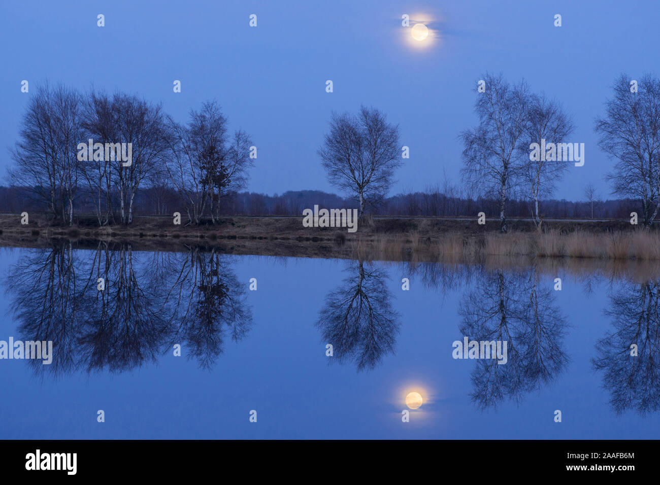 Mondaufgang im Moor Stock Photo