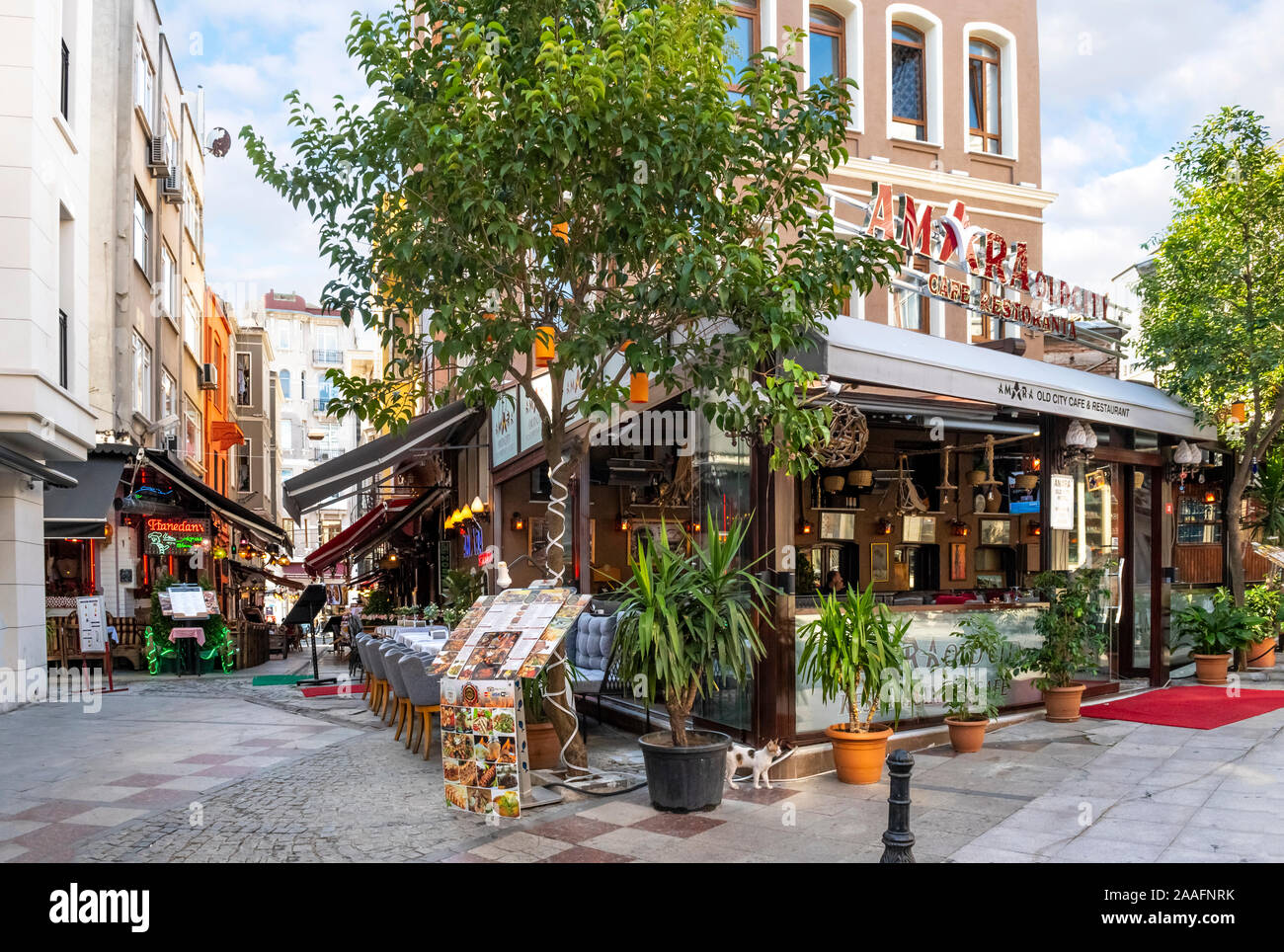 A stray calico tabby cat stands near a cafe in the Sultanahmet district of Istanbul, Turkey. Stock Photo