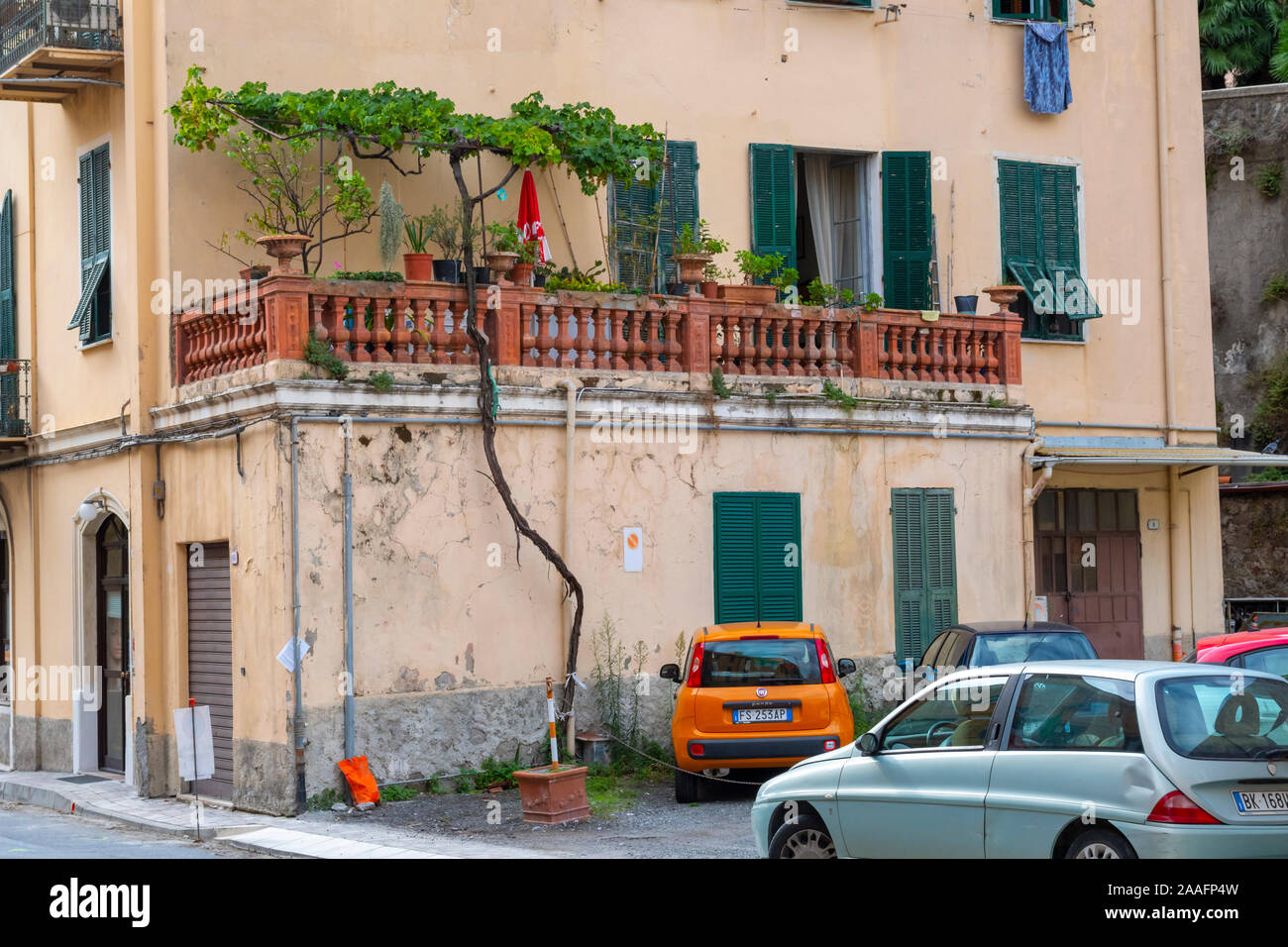 A tall thin tree grows and reaches to the first floor of an apartment in the city of Ventimiglia, Italy Stock Photo