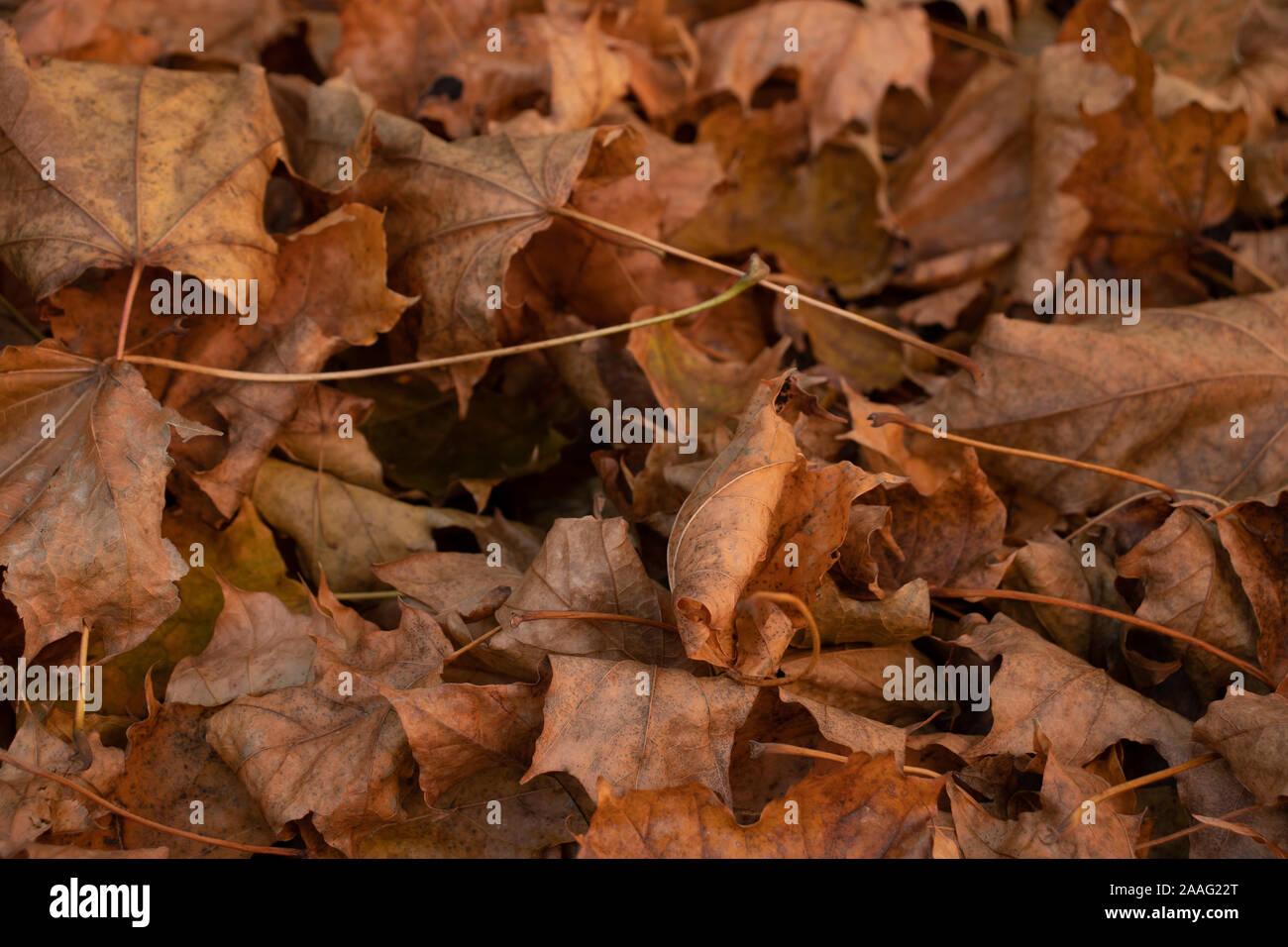 November Leaves Stock Photo